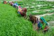 किसानों की समस्यायें व उनका निवारण